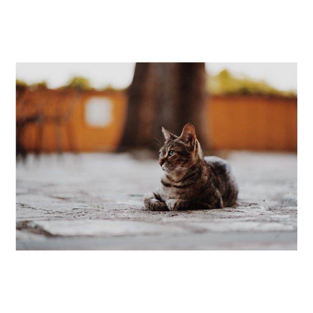An Italian cat. Shot on the @SonyUK a7iii + Sony 85mm 1.8...