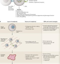 nature reviews genetics twitter stem cell bioengineering building from stem cell biology https t co h7ktqtqjg8 review by mtewary nika shakiba and  [ 726 x 1200 Pixel ]