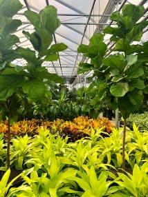 Croton Garden Center - Ftempo