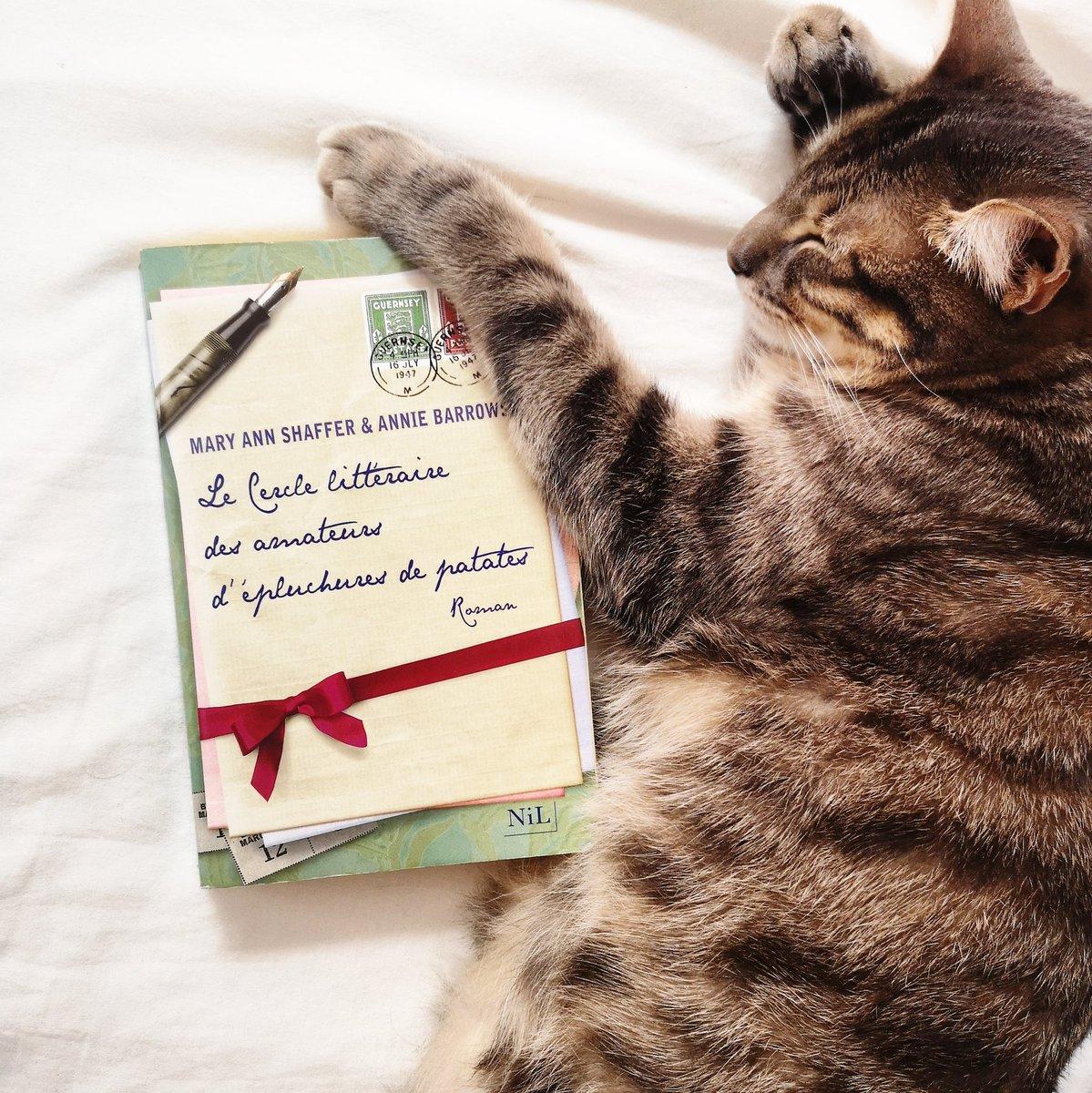 Adapte Moi Si Tu Peux Auf Twitter Un Chat Et Un Chouette
