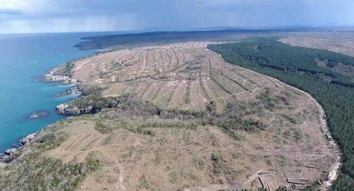 sinop ince burun orman katliamı ile ilgili görsel sonucu