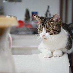 Cats In The Kitchen Floor Mats Washable 馬走日on Twitter 摩卡是一只 上得了厅堂下得了厨房 的猫 厨房里有人 厨房里 有人忙活的时候她就会跳上来在水池窄窄的边上静静地趴着看 ネコモカpic Com Ujkfqzanfp