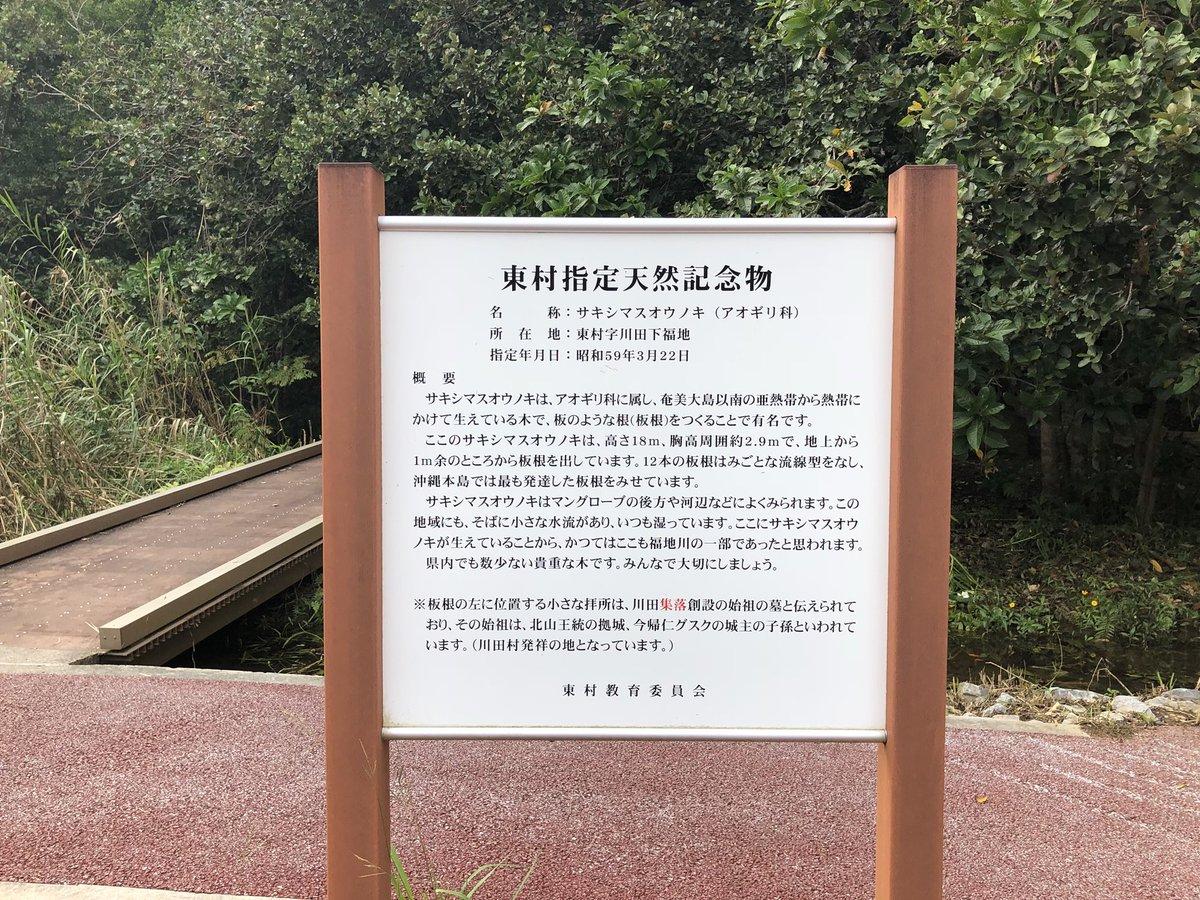 test ツイッターメディア - 沖縄県内でも数少ない貴重な木『サキシマスオウノキ』が東村にあります。マングローブの川辺にあることが多く、木板のような波打った根っこ(板根)をもつ珍しい木。で、木の実がコレ。ウルトラマンの生みの親、金城哲夫さんがウルトラマンのモチーフにしたと言われている実。息子たちも喜んでたよ。 https://t.co/mdcd4S0NEL