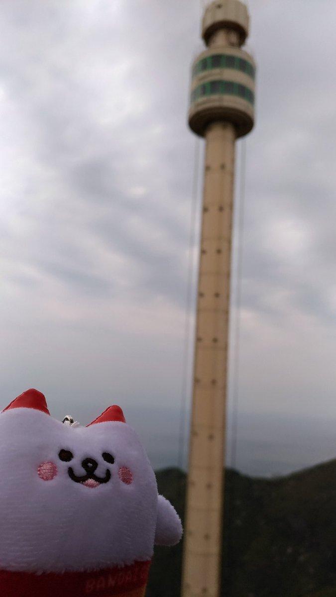 test ツイッターメディア - ちなみにこちらは、ぼくが以前 #ばんにゃい を連れて弥彦山に登った時の写真です。 レインボータワーと同型のパノラマタワーにも乗りました。 https://t.co/MsBBqGMv0N