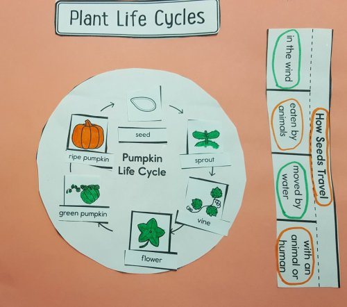 small resolution of brad linko on twitter just in time for halloween pumpkin science 2lrocks dg58learns sciencerules
