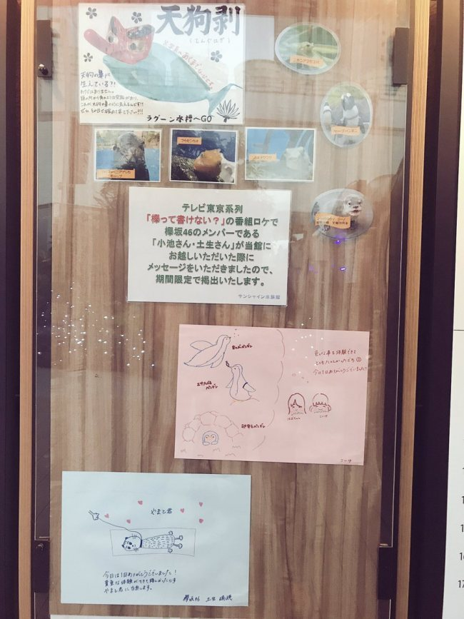test ツイッターメディア - 『欅って、書けない?』ロケで訪れたサンシャイン水族館にて小池美波と土生瑞穂の感謝メッセージを期間限定で展示 https://t.co/h0r30rKhIS https://t.co/8mAvUU0MeD