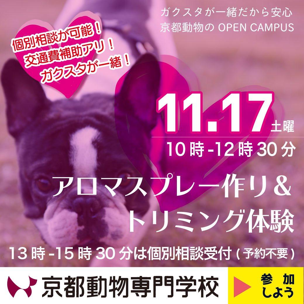 test ツイッターメディア - 17日の土曜日は、近鉄か京阪に乗って丹波橋にお越しください! そこから歩いてほんまに3分。 京都動物専門学校のオープンキャンパスは10時開幕です!! 午後なら15時30分まで個別相談🆗ですよ(^O^) お申し込みはいますぐどうぞ! https://t.co/10UeeRmnBj https://t.co/gLWHfjK2cz