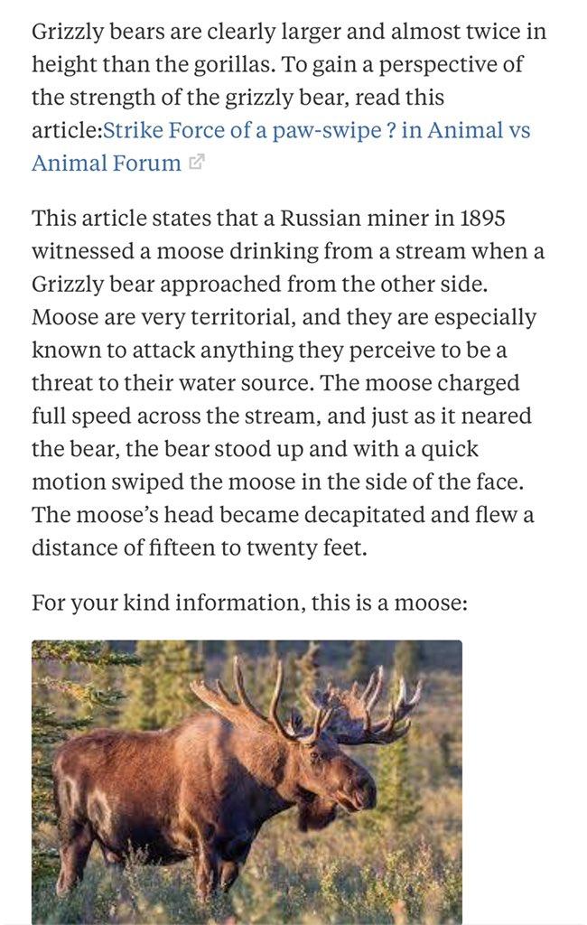 Moose Vs Bear : moose, Moose