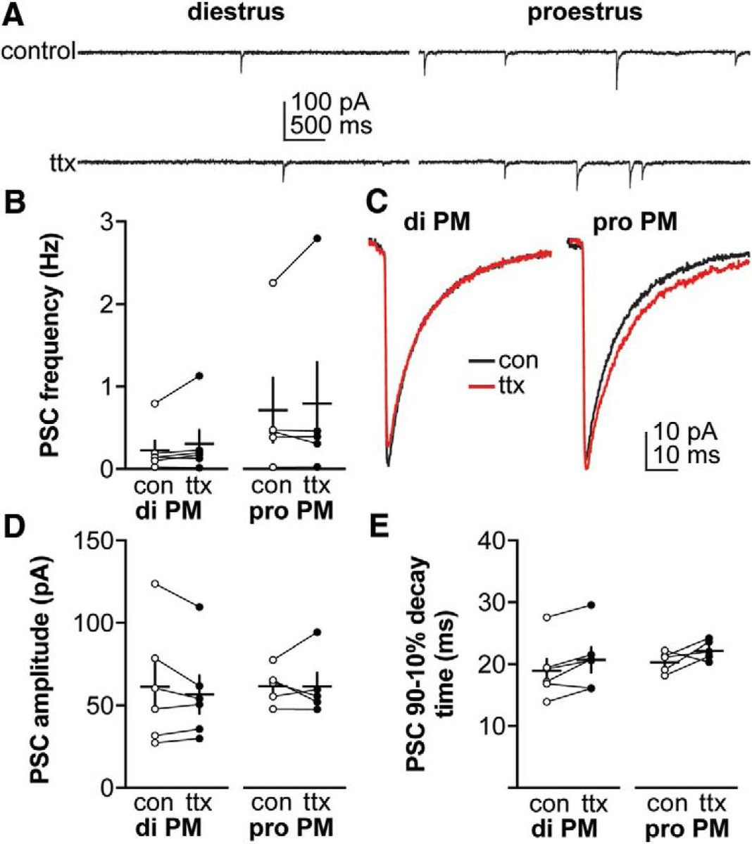 hight resolution of  in gabaergic transmission to and intrinsic excitability of gonadotropin releasing hormone gnrh neurons during the estrous cycle in mice