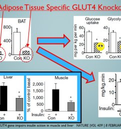 the glucose transport in at cells only and tip the mouse into massive ir hell hypertrophy hammers the glucose transport in at cells and hence isulin  [ 1200 x 666 Pixel ]
