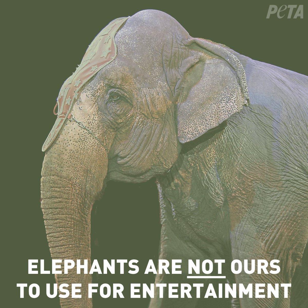 peta on twitter elephants