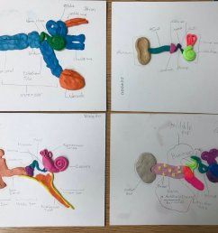 a look at our ear models that we created as part of our final project in our sound unit handsonlearning sciencepic twitter com 6oqpjh0cxp [ 1200 x 900 Pixel ]