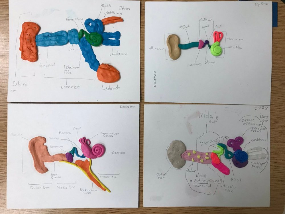medium resolution of a look at our ear models that we created as part of our final project in our sound unit handsonlearning sciencepic twitter com 6oqpjh0cxp