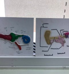 ryan mckillop on twitter a look at our ear models that we created as part of our final project in our sound unit handsonlearning science  [ 1200 x 900 Pixel ]