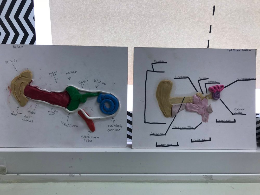 medium resolution of ryan mckillop on twitter a look at our ear models that we created as part of our final project in our sound unit handsonlearning science