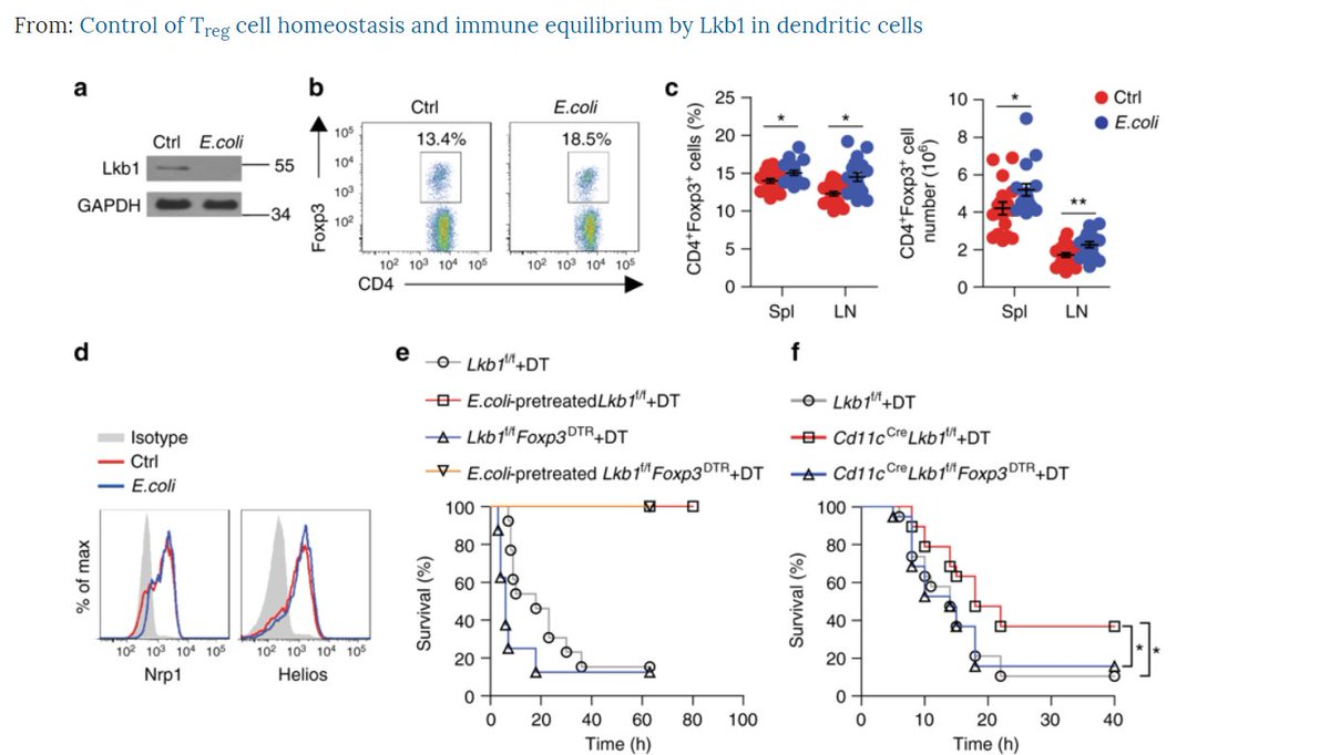 hight resolution of  dcs leads to excessive treg cell expansion in multiple organs and dampens antigen specific t cell immunity check it out naturecomms