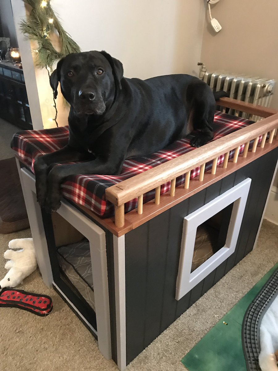 Dog Window Bed : window, Lanther™, Twitter:, Human, Special, Raised, Christmas., Height, Underneath, Window