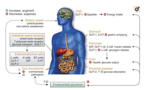 small resolution of the gut microbiome may mediate the subsequent metabolic response after nutrient ingestion this new review in frontendocrinol explores gut mechanisms