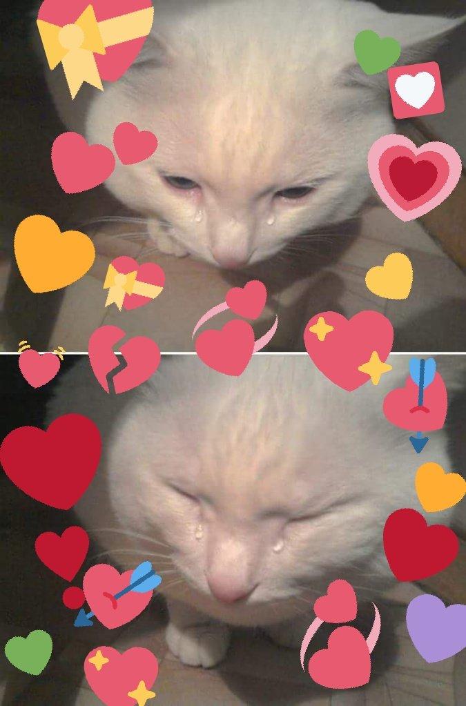 Cat Hearts Meme : hearts, Creation:, Crying, Hearts