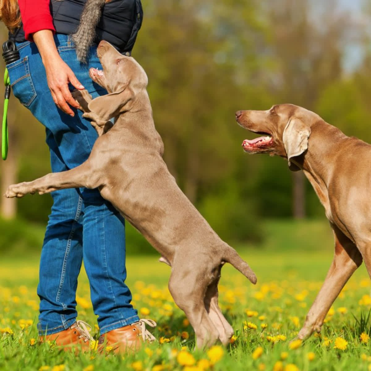 invisible fence greensburg pa meyer e47 wiring diagram pittsburgh pghpetservices twitter check out this article on getting your dog to stop jumping with the link below nojumping dogs invisiblefence http qoo ly ukwi2 pic com
