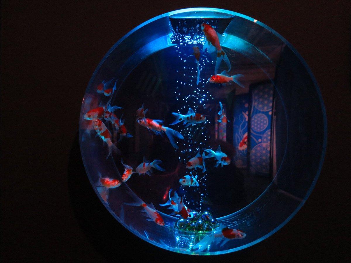 test ツイッターメディア - きんぎょとけんじ(ホラーチック)  魚を近くで撮るのがとても苦手。水族館行くと4枚目みたいな写真めっちゃ撮れる(´ω`) https://t.co/sTBvhGxda7