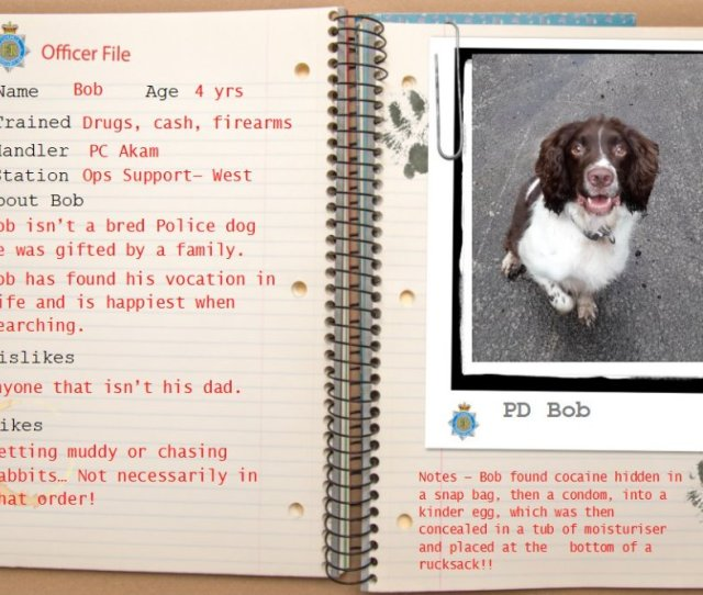 Bob Loves Searching And Is Excellent At It Too Meetthepack Lovestowork Livestosearch Policedogunit Xandernbobpic Twitter Com Qtfzpwuu