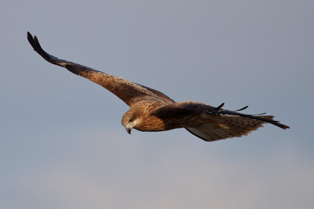 test ツイッターメディア - 今日小川原湖で撮った鳥 https://t.co/GWJPn5IgKv