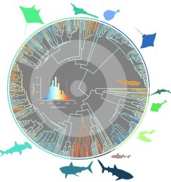 our new paper in journal evo studies the evolutionary pathways toward shark gigantism https onlinelibrary wiley com doi full 10 1111 evo 13680  [ 1195 x 1200 Pixel ]