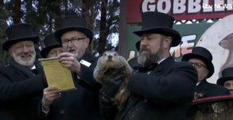 NSFWBDs Analyze Groundhog Day & Punxsutawney Phil