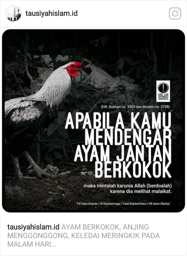 Ayam Berkokok Di Malam Hari : berkokok, malam, Mursidi933@gmail.com, (@mursidi933), Twitter