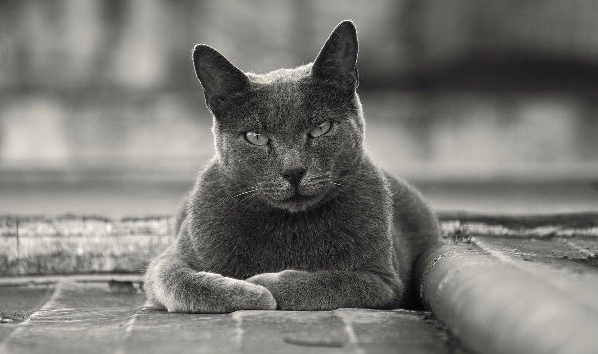 black metal cats evilbmcats
