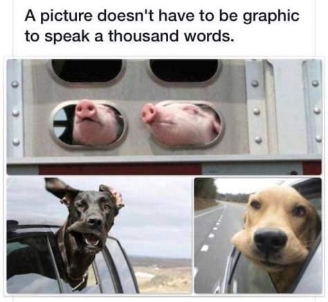 lotof_barking photo