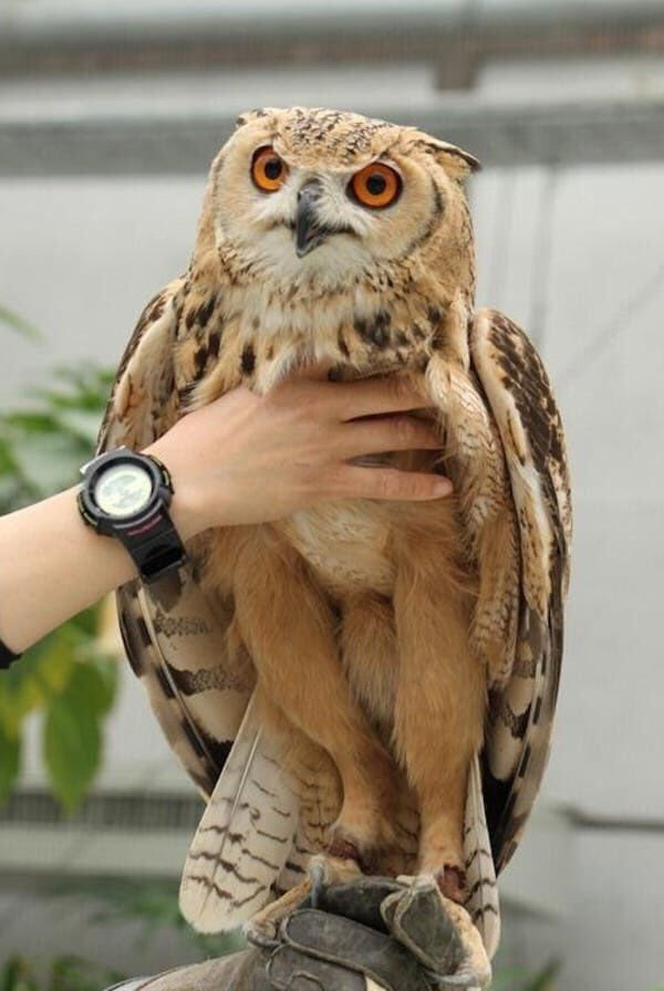 Owl Legs : Sarah, O'Connell, Twitter:, Today, Years, Learned, 🦉…