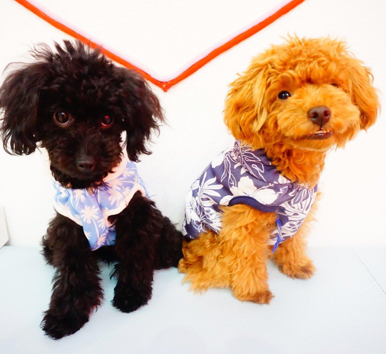test ツイッターメディア - 珍しい組み合わせ✨ みんな、夏らしいお洋服で決めてます😎  いぬのきもち#犬ばか部#犬カフェ#犬すたぐらむ#犬のいる暮らし#黒柴#豆柴#柴すたぐらむ#柴犬#プードル#犬好きな人と繋がりたい#東京#秋葉原#インスタ映えスポット https://t.co/mfRfBZJWjh