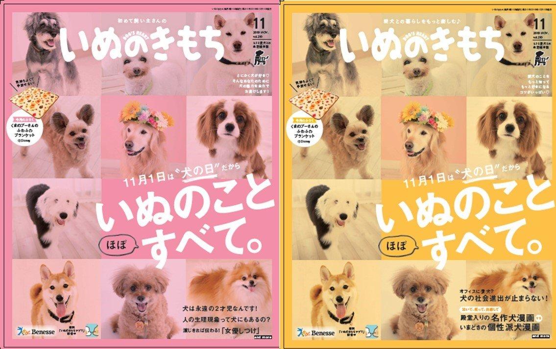 test ツイッターメディア - キスマイの横尾渉さん特別インタビュー掲載「いぬのきもち」11月号、お申込み締め切りは明日まで!犬愛にあふれる取材でした~! #キスマイ #横尾渉 #いぬのきもち https://t.co/r4mposrHMm