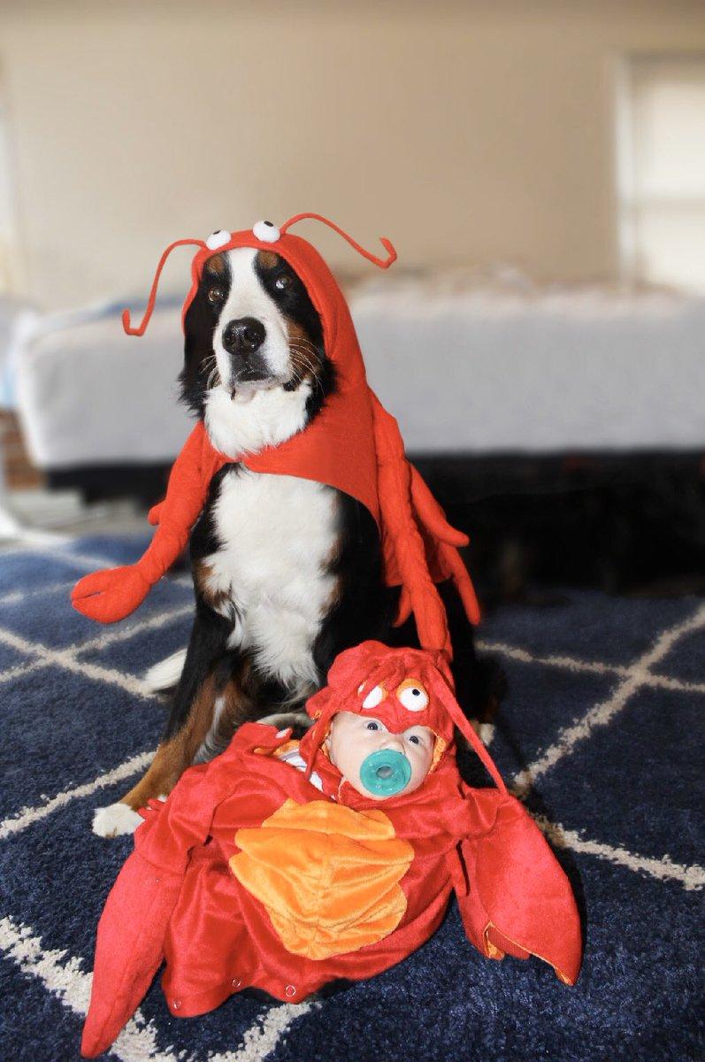 Moose Dog Costume : moose, costume, Brandy, Moose, Twitter:,
