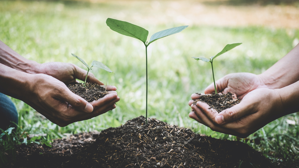 Repsol sees reforestation as natural hedge against failure to commercialise CCUS... 12