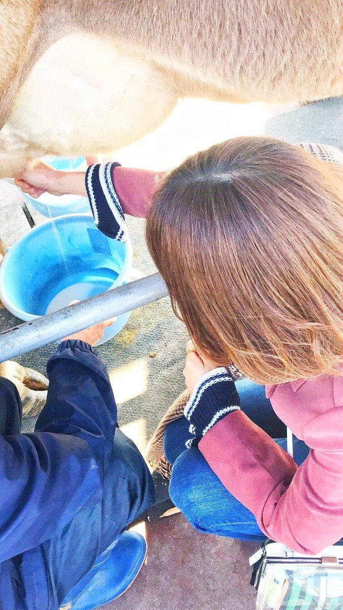 test ツイッターメディア - 熊本に3日間の旅ʕ-̫͡-ʔ👌  酪農に触れたり、美味しい炭火地鶏焼きや九州のラーメンをいただいてきました🥢✨  満喫したので東京に戻ってまた頑張ります✈︎✈︎  #熊本旅行 #九州ラーメン #地鶏焼き #酪農 #ミルク牧場 #ラーメン部 https://t.co/WkVfxbYk7K