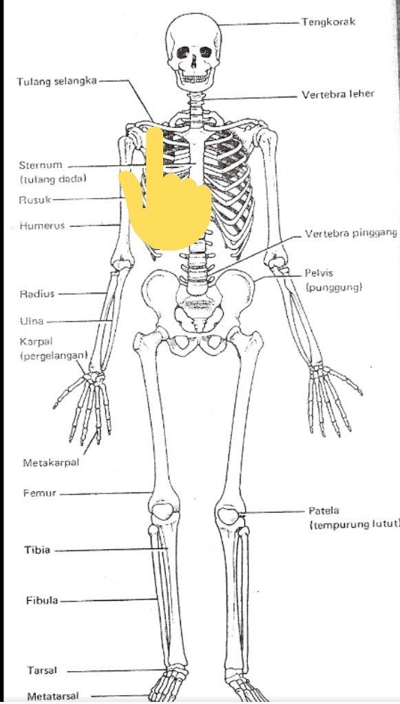 Tulang Tempurung : tulang, tempurung, Gaemica, 🚙🚗🚐, Twitter:, Teruk, Ke?…