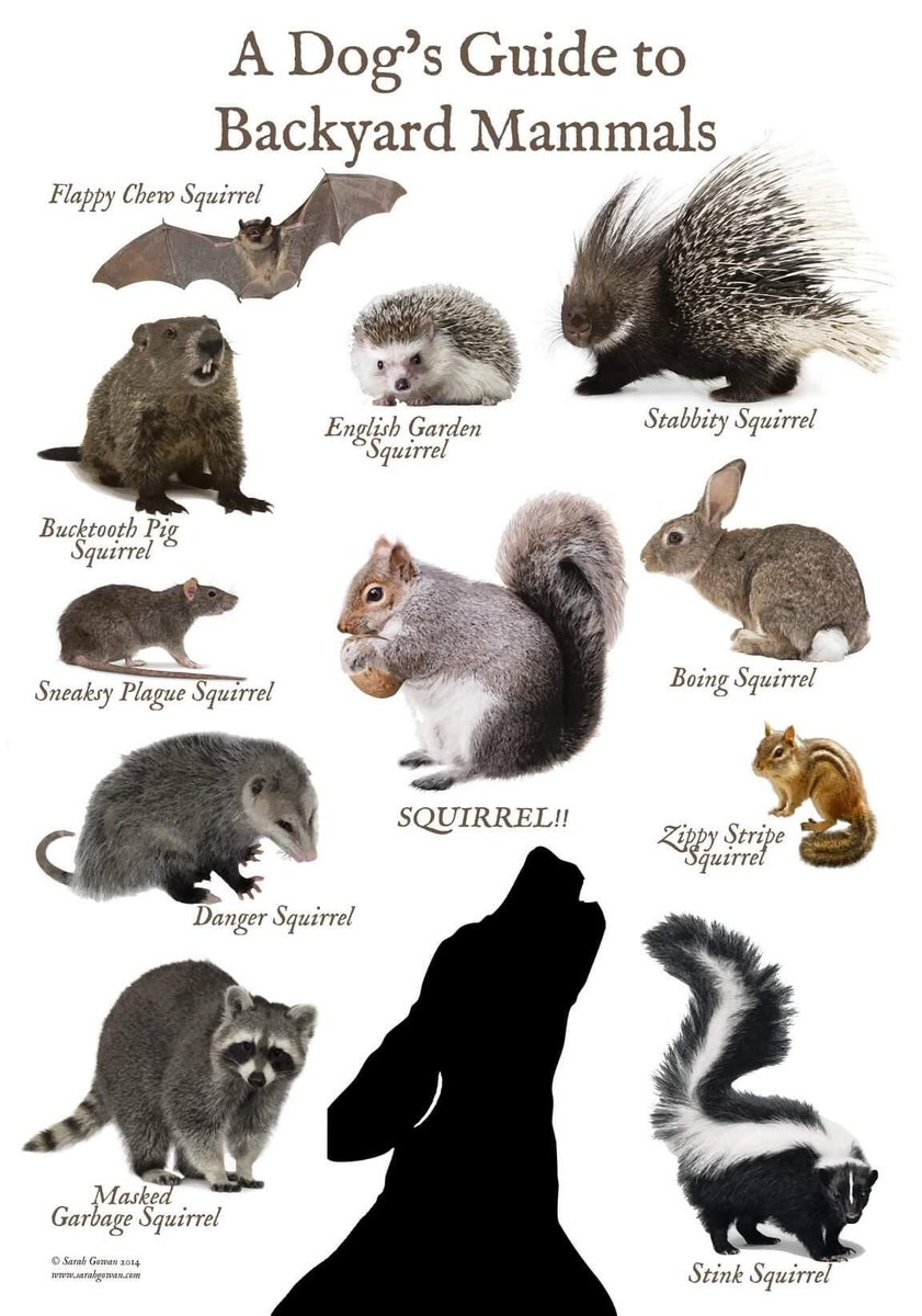 Morris Animal Refuge Twitterissa Many Folks With Backyards Have Been Spending Even More Time There Recently So Here S A Dog S Guide To Backyard Mammals By Sarah Gowan Via Ewillse Https T Co R1hag0q7dk