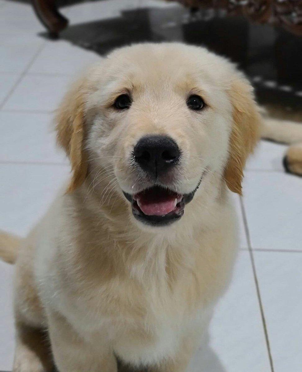 Polosan Muka Anjing : polosan, anjing, Twitter:,