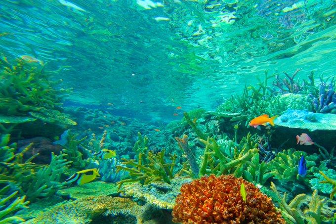 『名古屋港水族館』の評価や評判,感想など,みんなの反応を1週間ごとにまとめて紹介! ついラン