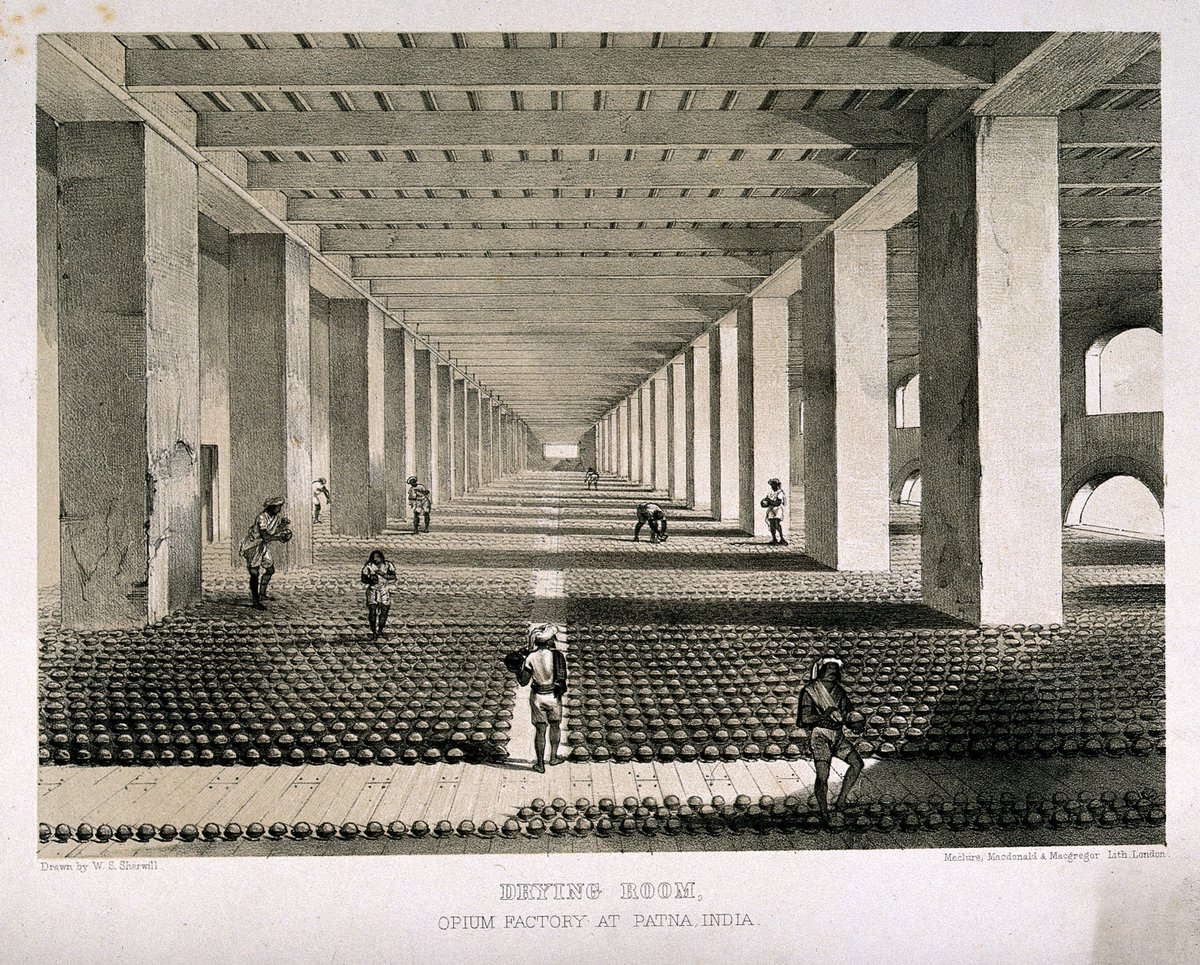 A huge building with opium cakes set up in long rows, with workers tending to them. It seems to go on forever.