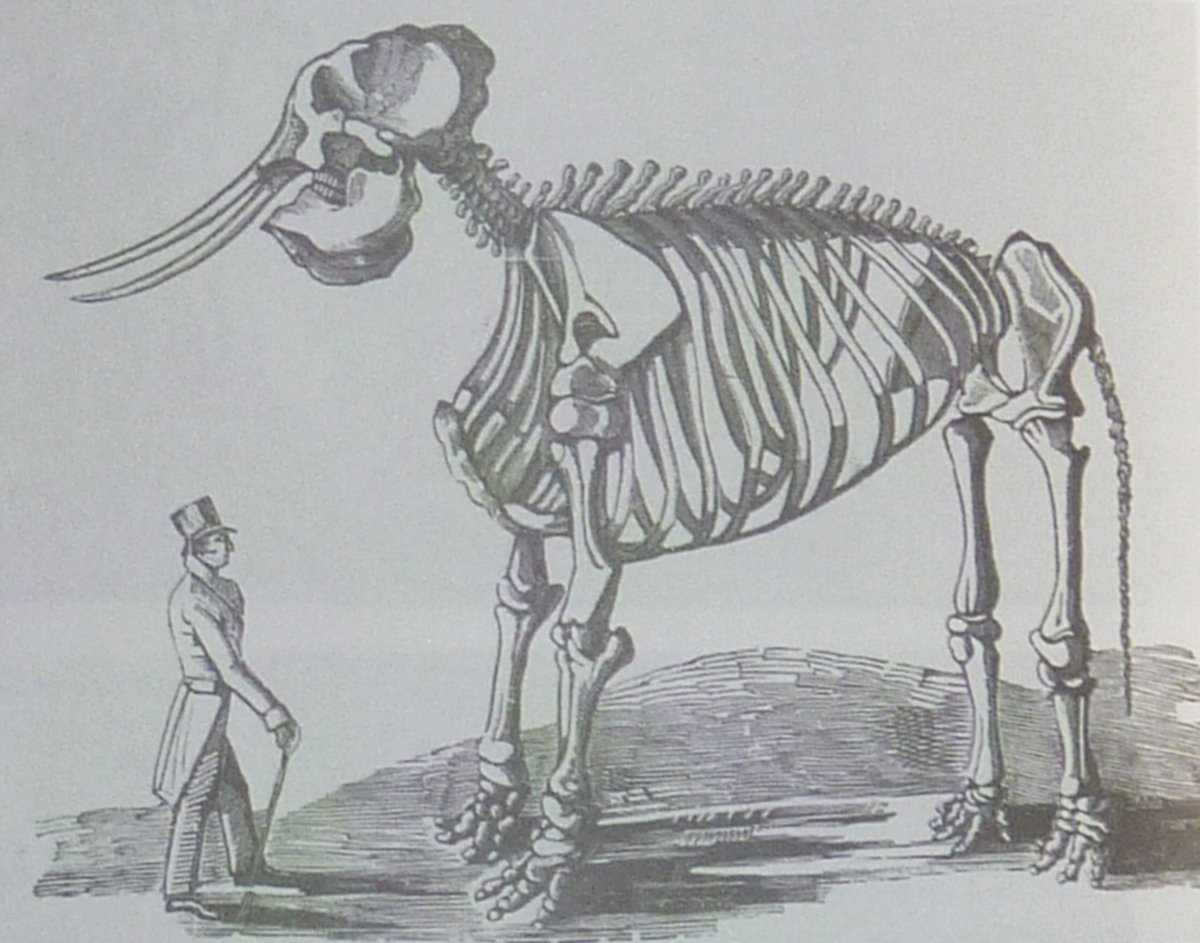 A man with a hat and cane and tails next to a skeleton of Chunee. Lithograph.