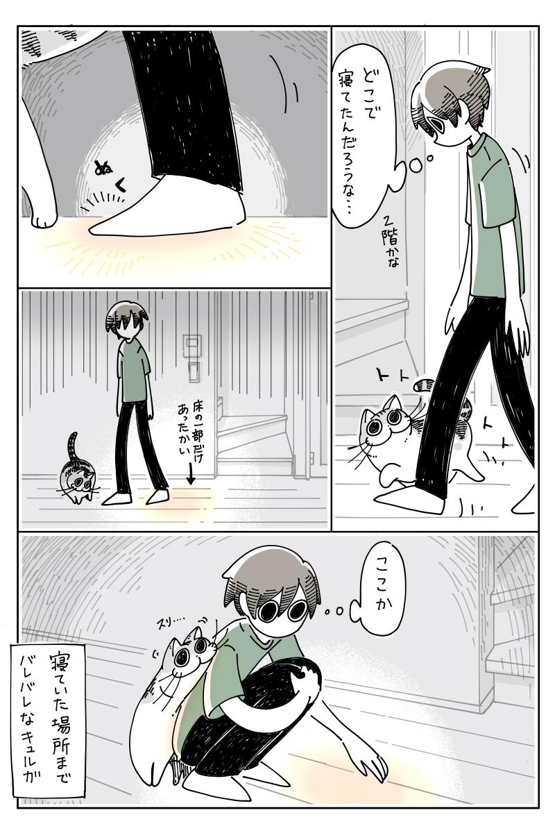 [閒聊] 睡覺中的貓 - 看板 C_Chat - 批踢踢實業坊