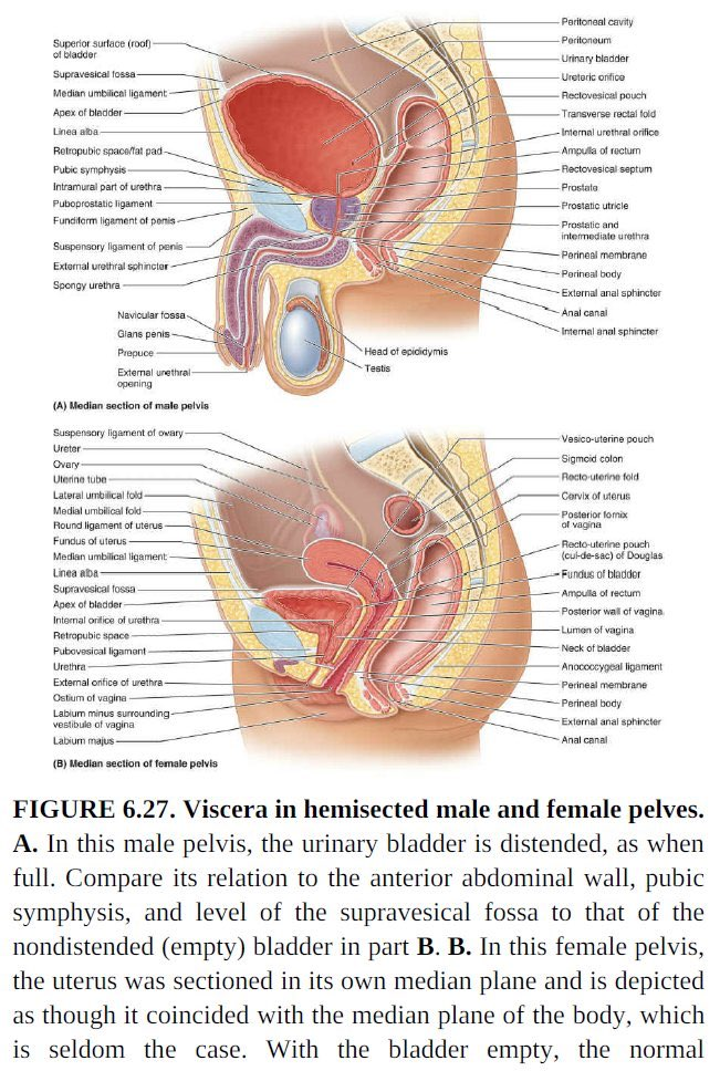 Cul-de-sac De Douglas : cul-de-sac, douglas, Jessica, Twitter:, #anatomy, Textbooks,, Penises, Always, Hung., Clitorises,, Meanwhile,, Appear, They've, Undergone, Female, Genital, Mutilation., Isn't, Anyone, Talking, About, This?, There, Accurate, Sagittal, Views
