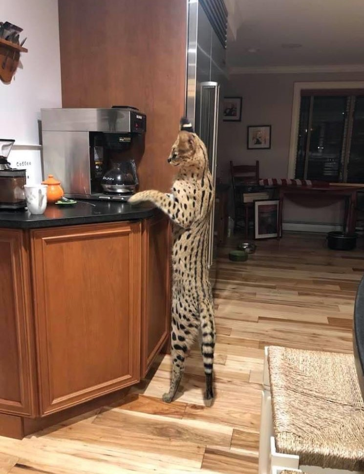 is this cat making coffee https://t.co/QY2jHe9VxW