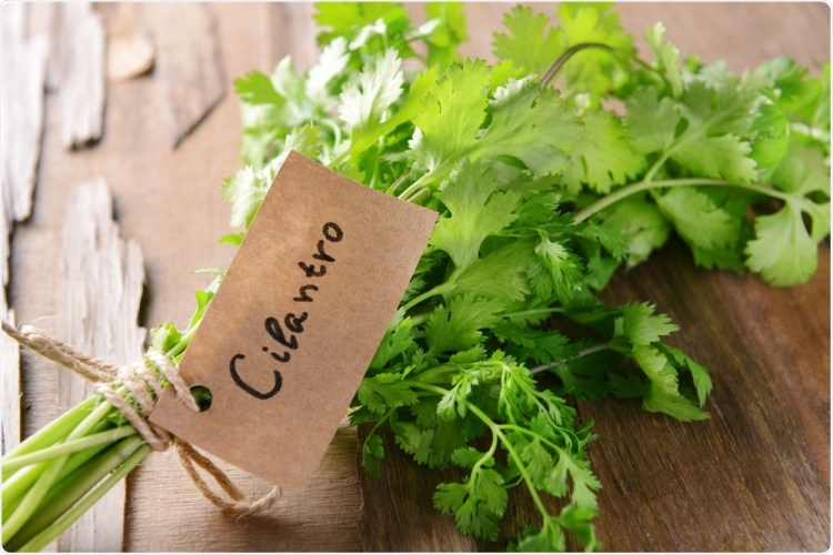 🌿 New Episode This Week! 🌿  The @CuriousClinPod will investigate why some people absolutely love cilantro while others taste soap if they try to eat it.   Pre-read this #tweetorial by @AvrahamCooperMD