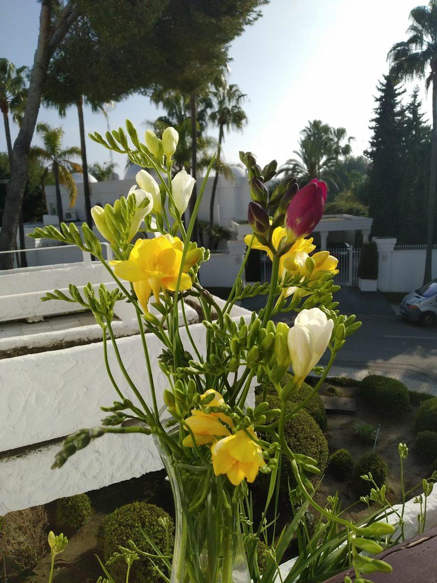 Freesia Flower Meaning : freesia, flower, meaning, Helen, Teacher, Twitter:,