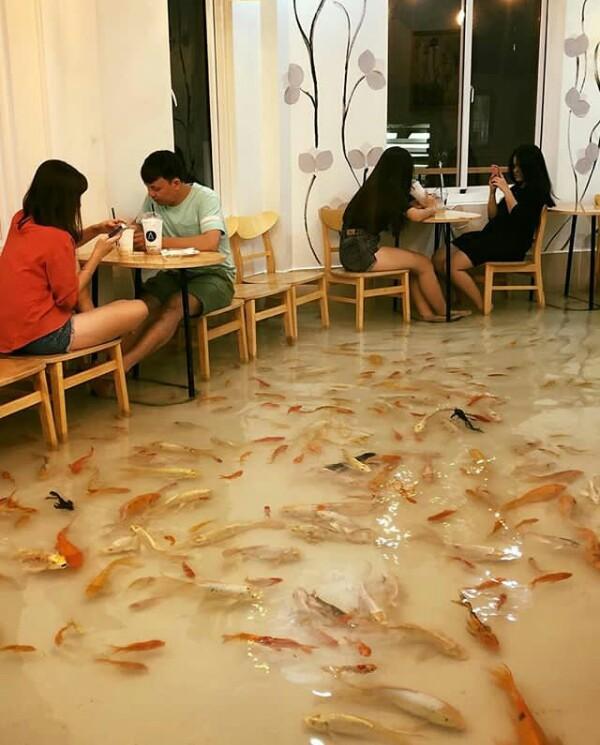 Koi Fish Cafe : Explainer, Twitter:,